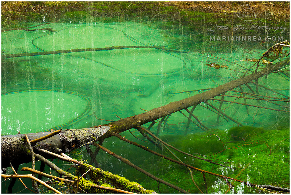 Blue Springs of Saula