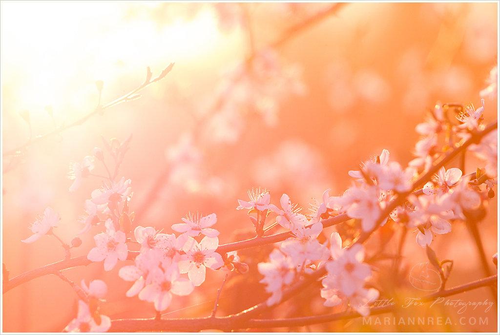 Kevadised õied puul I