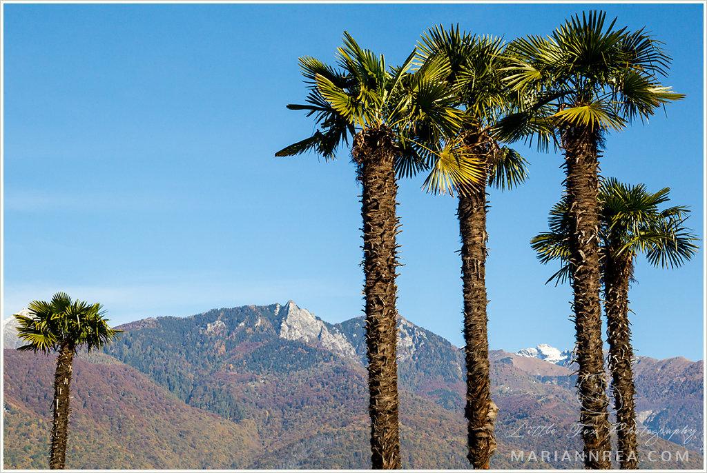 Palmid ja Šveitsi mäed